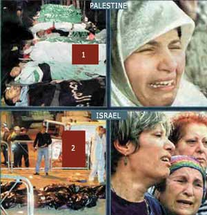 derita palestina
